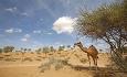 Om du har lyst, kan du ri på kameler