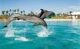 Hotellet har et eget delfinsenter