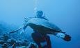 Constance Moofushi ligger i Ari Atoll som har svært gode dykke og snorkleforhold