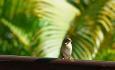 Det er et rikt fugleliv på La Digue