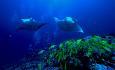 Det er et fantastisk undervannsliv ved Helengeli og hotellet har PADI dykkesenter