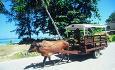 På den vakre øya La Digue kommer du deg rundt med oksekjerrer