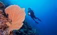 Innahura ligger rett ved Maldivenes lengste korallrev og er et paradis for dykkere med sitt fantastiske undervannsliv.