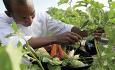 Hotellet dyrker sine egne grønnsaker. Om ønskelig kan du selv være med å forberede din egen picknic fra hotellets grønnsakshage.