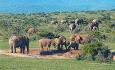 Addo Elephant National Park er spesielt kjent for sine elefanter.