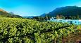 Etter noen dager i Cape Town anbefaler vi at turen går til det kjente vindistriktet Winelands, hvor du kan bli med på vinsmaking og evt. innhøsting av druer.