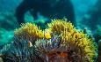 Manta Resort har PADI dykkesenter og Pemba er godt kjent for sine fantastiske undervannsliv.