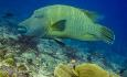 Det er dykkesenter på Maafushi med flere gode dykkersteder i nærheten