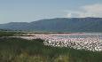 Lake Nakuru er kanskje mest berømt for sine blekrosa flamingoer