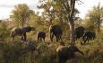 Her har du størst mulighet til å kunne få se The Big Five (elefant, løve, leopard, neshorn, bøffel)