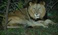 Men om du har mulighet vil vi anbefale safari i Krugerparken som er mer dyrerik.
