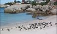Pingviner er noe du kan se på enkelte strender i Sør-Afrika